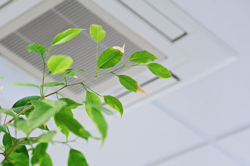Improve indoor air quality with these tips